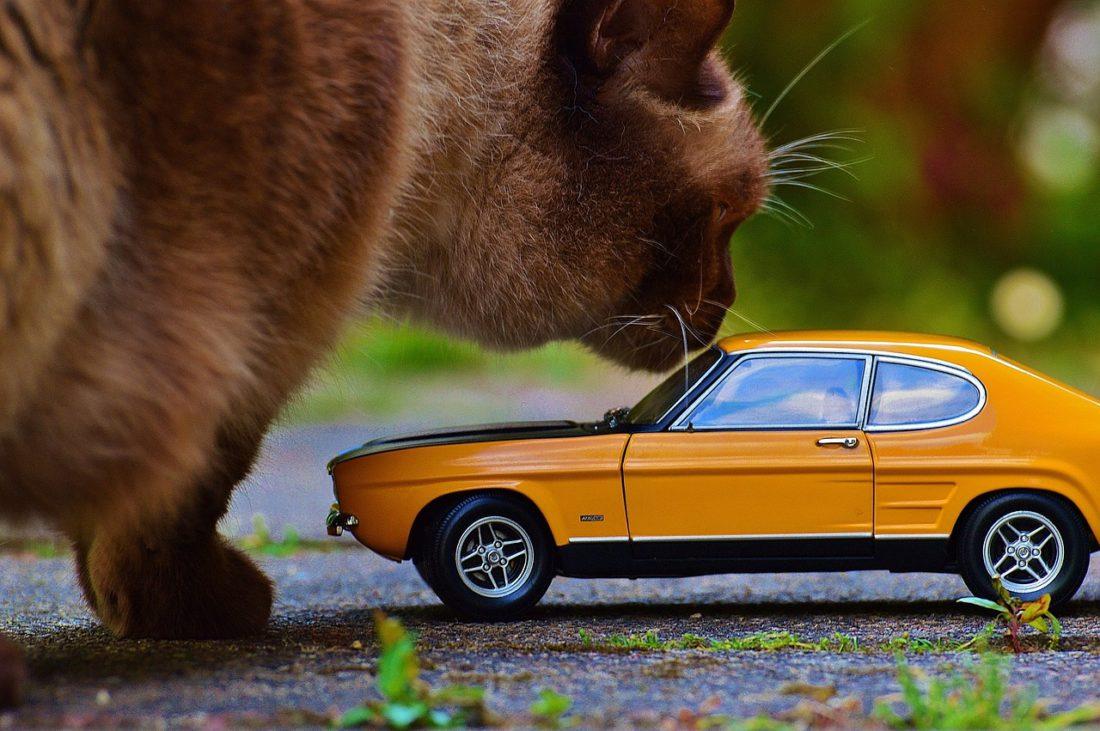 mały samochód zabawka